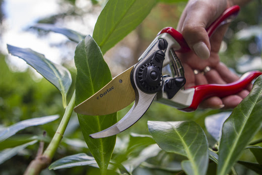 A close up image of the Darlac Expert Titanium Bypass Pruners being held in front of a leafy plant background