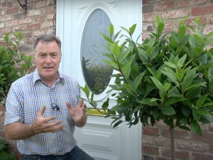 How to Prune Bay Trees & Beech Hedges in Summer